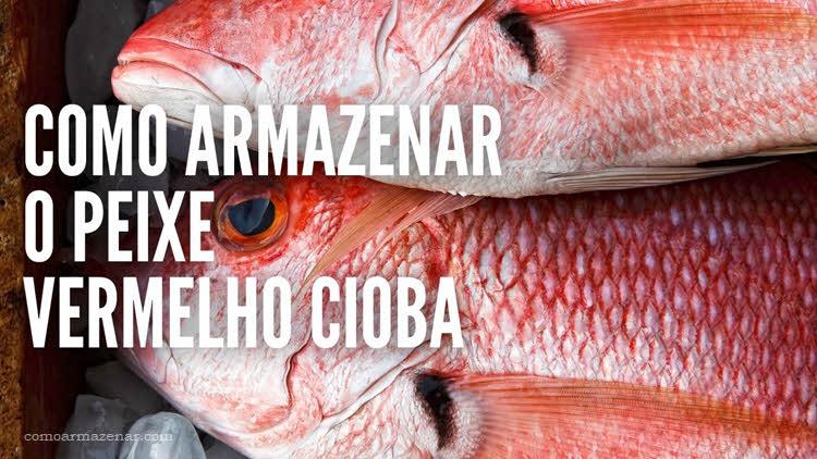 Como armazenar o peixe Vermelho Cioba